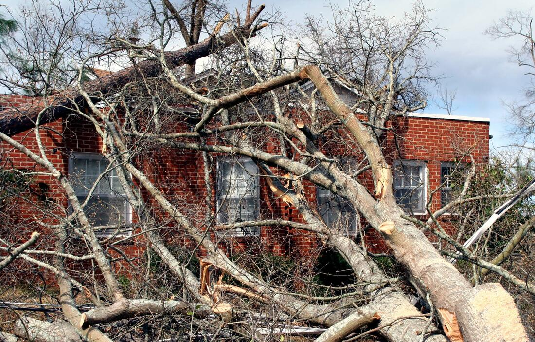 Picture shows large trees on a building. The damage looks like it happened after a hurricane.